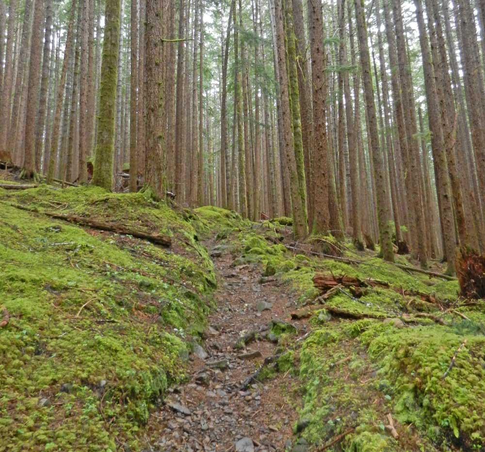 Hill_Trail